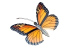 mariposa-021