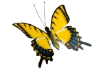 mariposa-03
